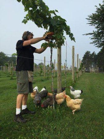 Whistler & Heirloom Chickens