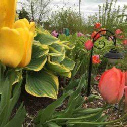 Holly's Wine Garden in Spring